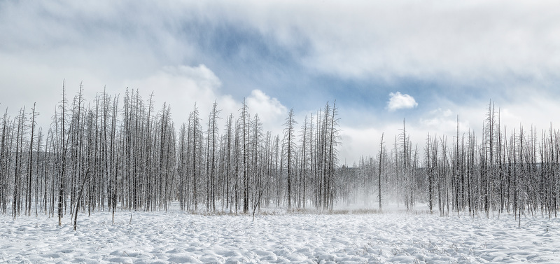 Barlau-Carol-20140206_0852-CFX-DE-GG-Winter-Yellowstone